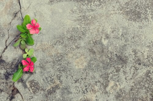Flowers on pavement.
