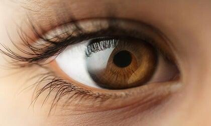 A brown eye.