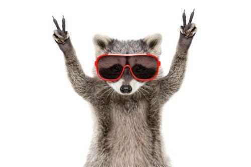 An animal wearing sunglasses.