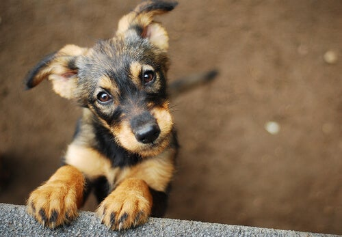 Rescued Pets: How to Choose Your New Best Friend