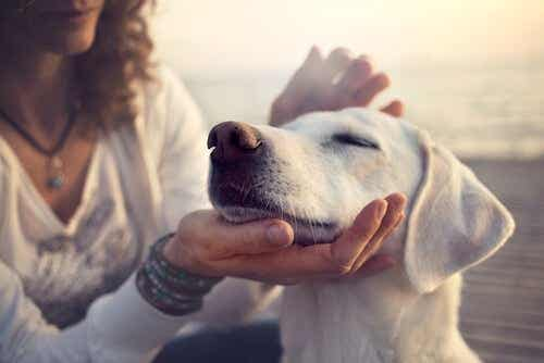 5 Reasons Why Your Dog Is Your Best Friend