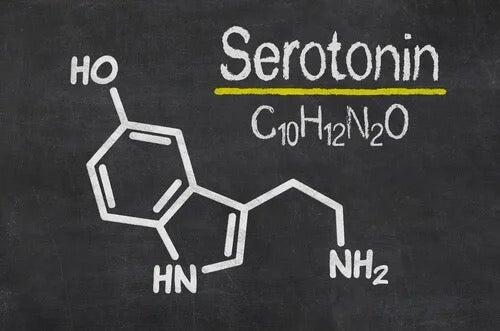 Biological make up of the serotonin transporter gene.