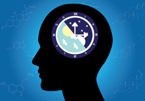 What Circadian Rhythms Are and How They Work