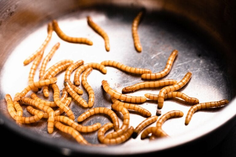 Vermiphobia, the Fear of Worms