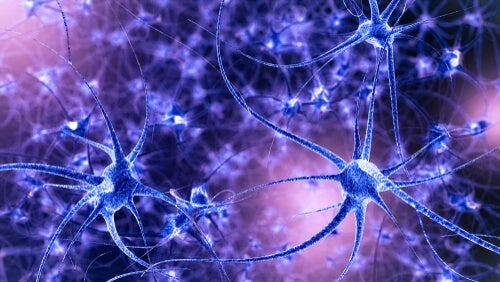 A photo of mirror neurons.