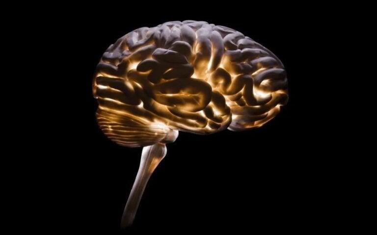 Neurocriminology, the Understanding of Criminality