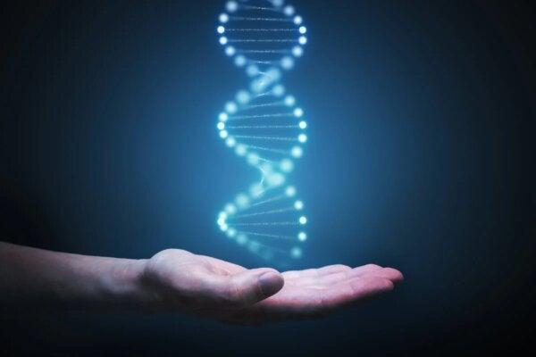 The C38 gene.