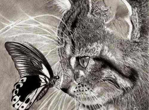 En bild av katten och fjärilen.