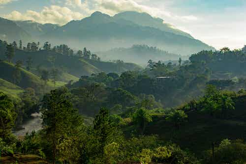An image of green jungle.