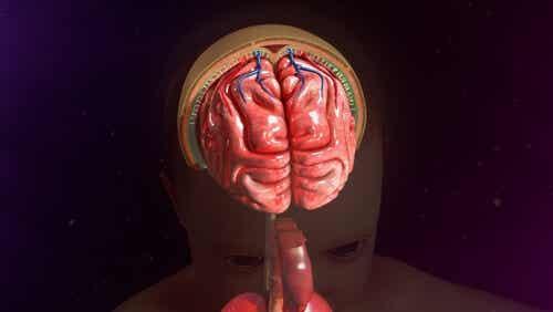 뇌의 수막.