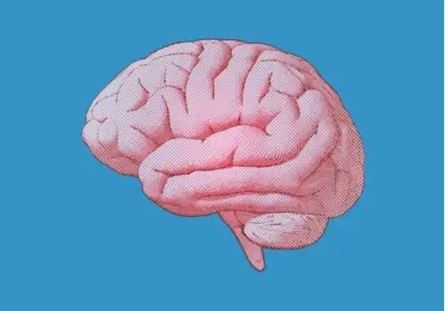 Illustration af en hjerne