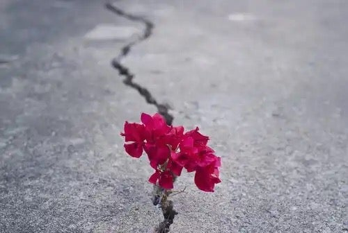 Blomst vokser i revne i asfalt