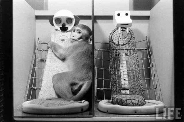A monkey hugging a cylinder.