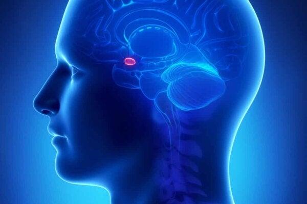 De amygdala van een persoon.