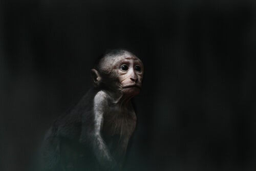 The Pit of Despair - Monkey Business