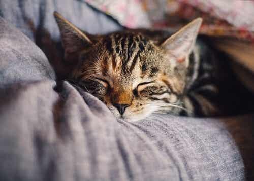 Kannattaako lemmikkien kanssa nukkuminen?