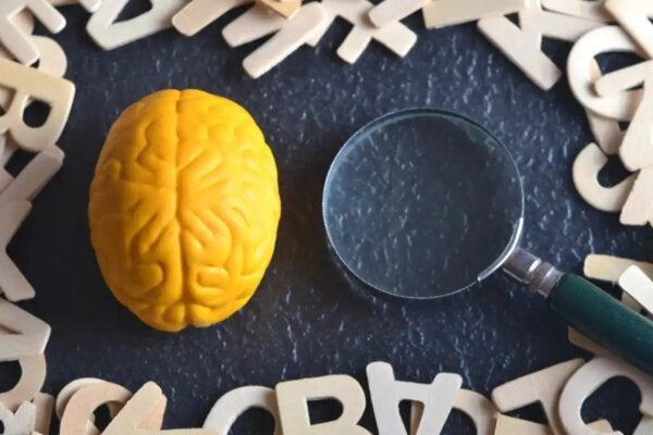 A brain and a magnifying glass.