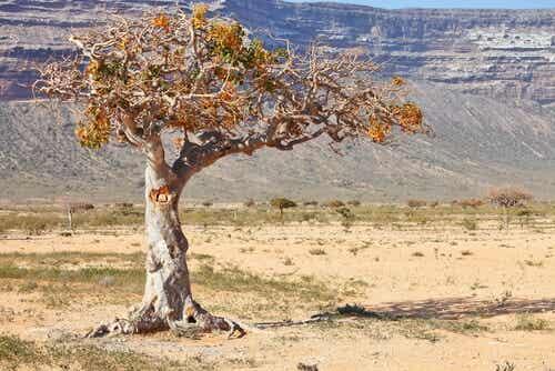 Yksinäinen puu.