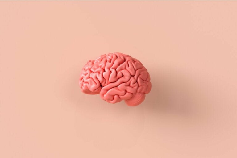 Neuroethics, A Fascinating Look at the Brain and Moral Behaviors