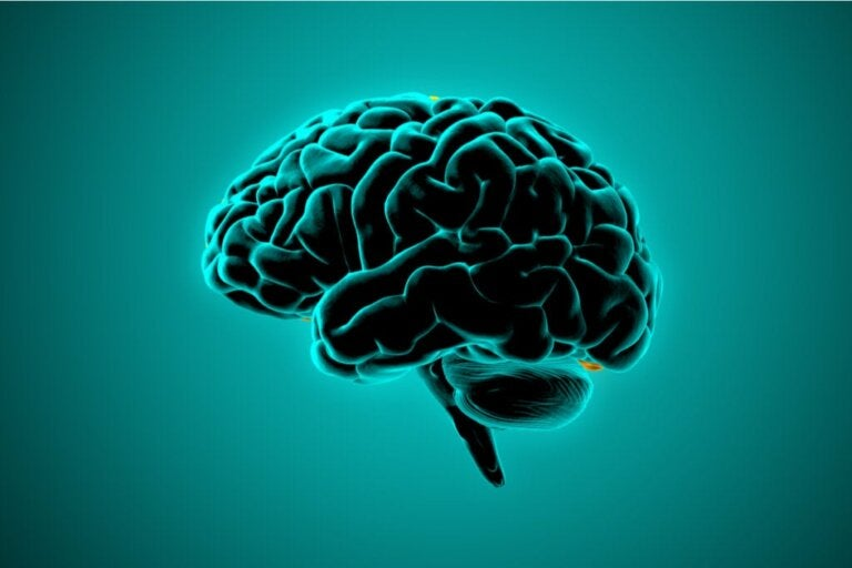 What Neuroscience Says About the Brains of Violent People