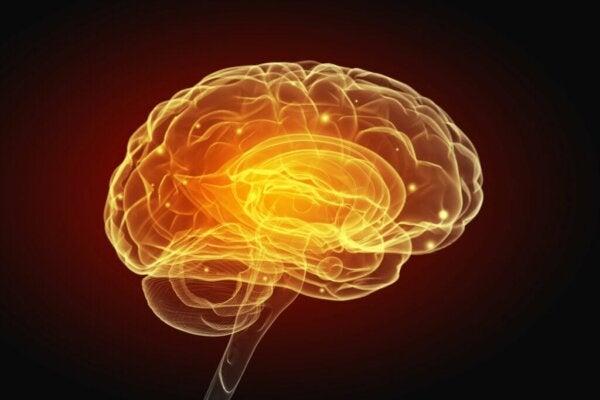 Selfish and Generous Behaviors Change the Function of the Brain