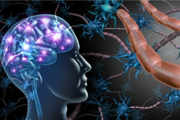 The Differences Between Multiple Sclerosis and ALS