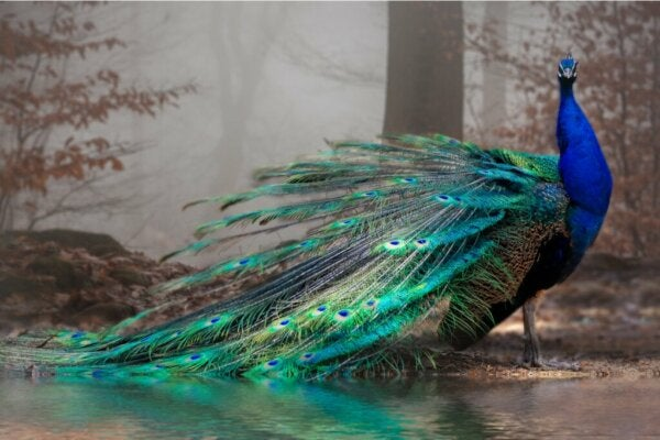 11 of the Most Beautiful Animals in the World
