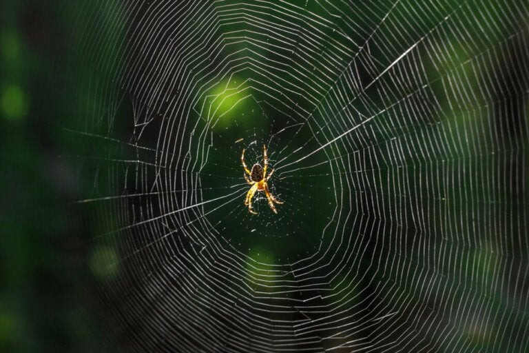 What Does it Mean When You Dream About Spiders?