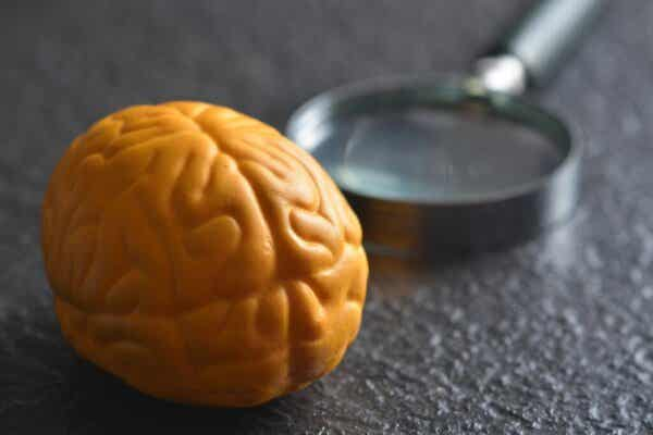 Why Does The Brain Have Two Hemispheres?