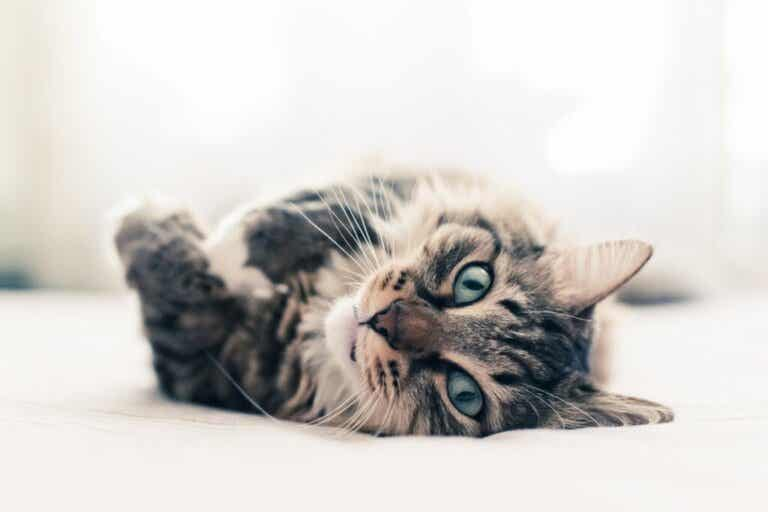 Ten Curious Facts About Cats