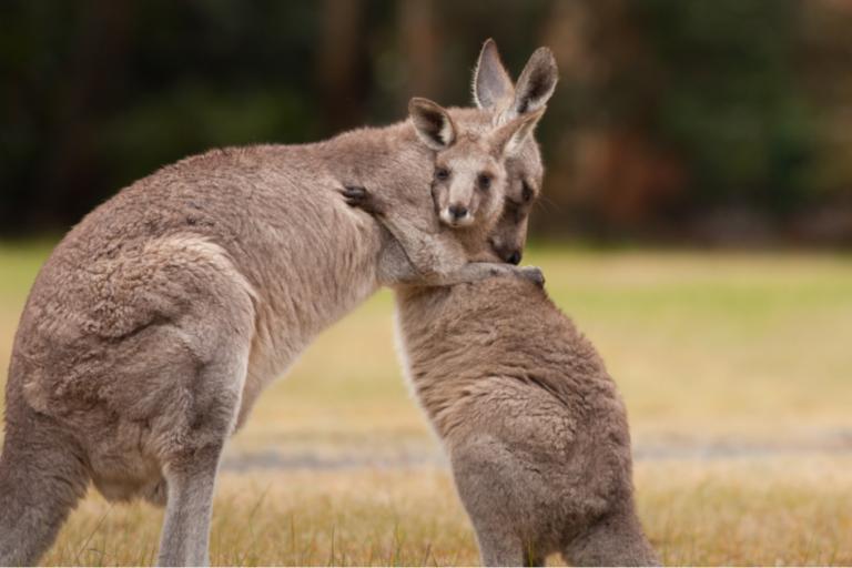 Do Animals Hug Each Other?